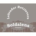 Soldalens labradorinnoutaja kasvattaja